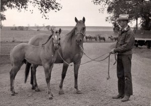 Mare and colt with a stud.