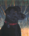 Painting of the Labrador, Bo